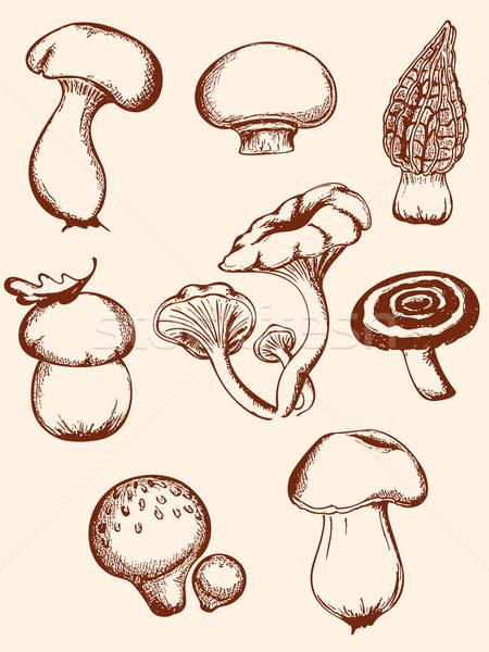 set of vintage forest mushrooms Stock photo © Artspace
