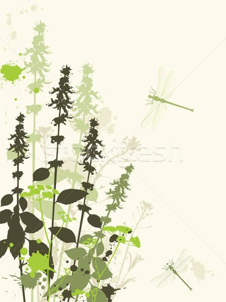 Yeşil kır çiçekleri grunge vektör yusufçuk çiçek Stok fotoğraf © Artspace