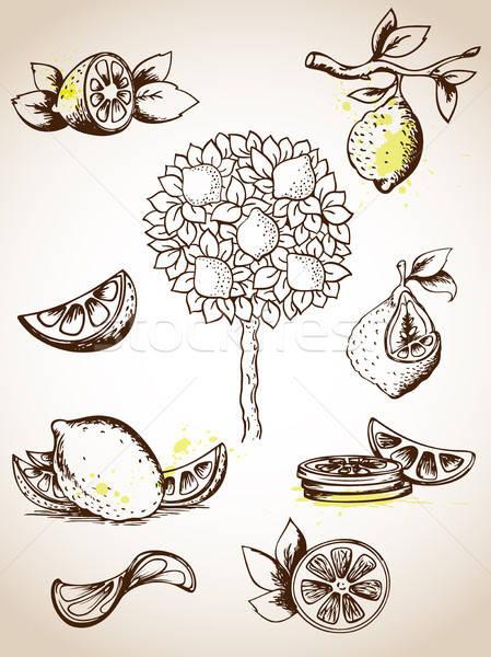 Vintage establecer vector limonero alimentos Foto stock © Artspace