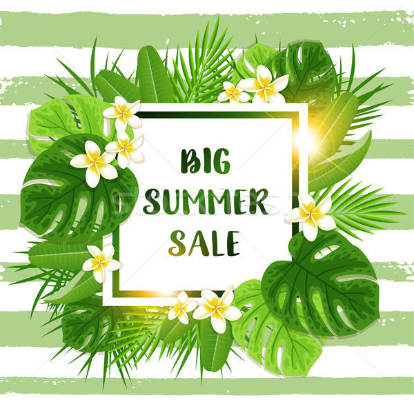 Summer tropical background for seasonal sale Stock photo © Artspace