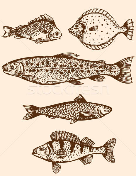 Vintage fish Stock photo © Artspace