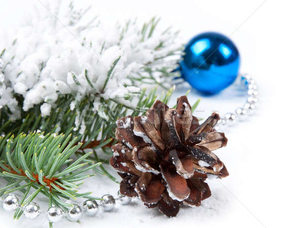 pine cone  and fir branch  Stock photo © Artspace