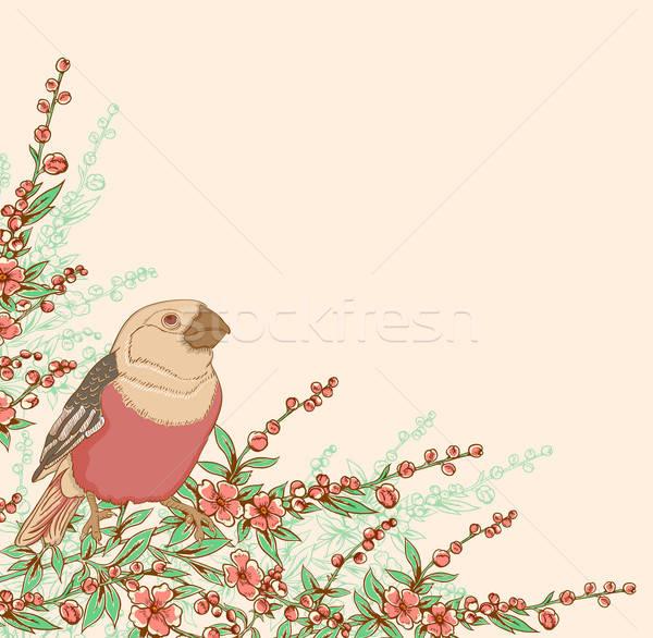 птица цветения филиала сидят вектора дерево Сток-фото © Artspace