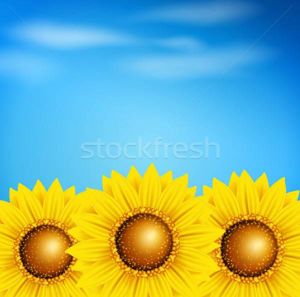 Foto stock: Girassóis · blue · sky · decorativo · vetor · verão · projeto