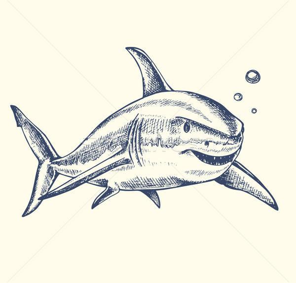 Haai vector zwemmen water natuur Stockfoto © Artspace