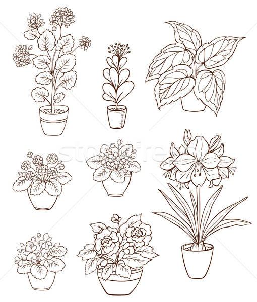 Set of various houseplants Stock photo © Artspace
