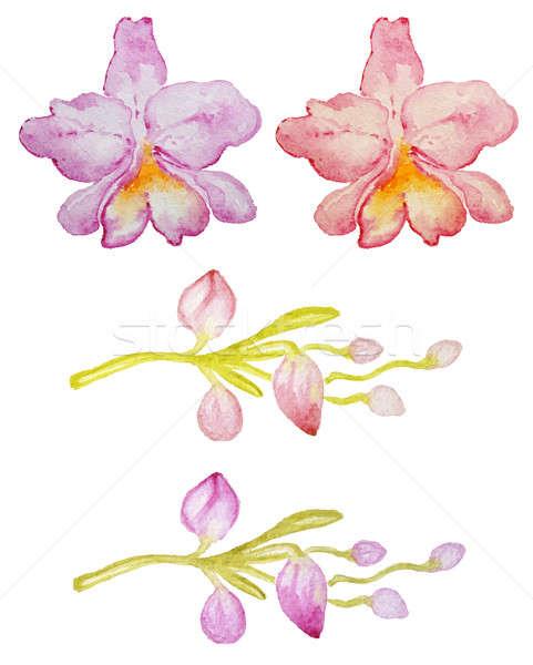 Foto stock: Rosa · vermelho · orquídeas · aquarela · flor
