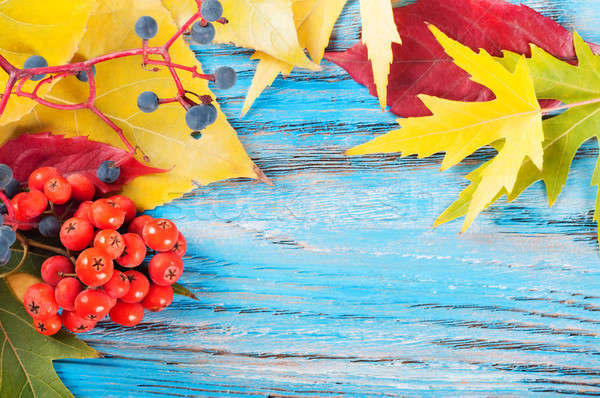 Autumn background with berries Stock photo © Artspace