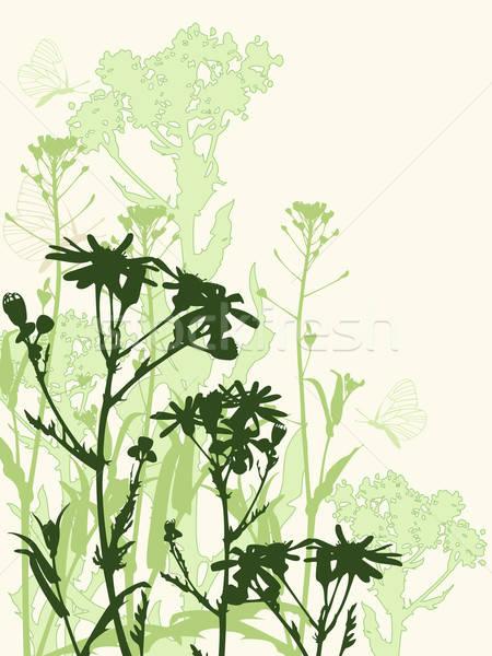 Stock foto: Floral · Blumen · Schmetterlinge · grünen · Kamille · Schmetterling
