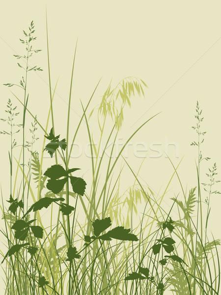 Zöld fű vektor virágmintás tavasz fű levél Stock fotó © Artspace