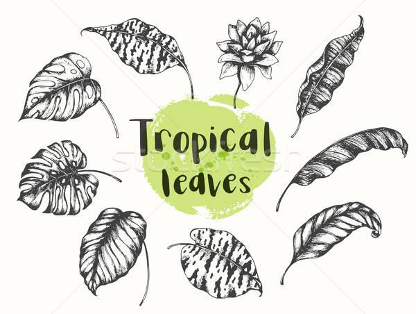 Stok fotoğraf: Yaz · tropikal · dizayn · elemanları · ayarlamak