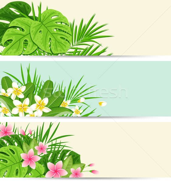 Foto stock: Tropicales · banners · hojas · verdes · horizontal · flores · hojas