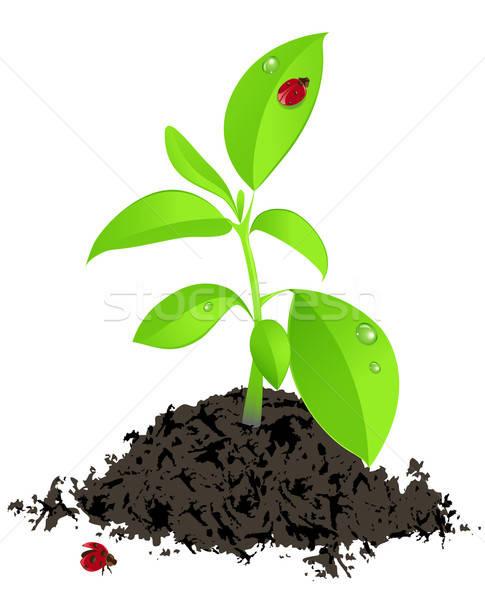 Fiatal zöld növény katicabogár fehér fű Stock fotó © Artspace