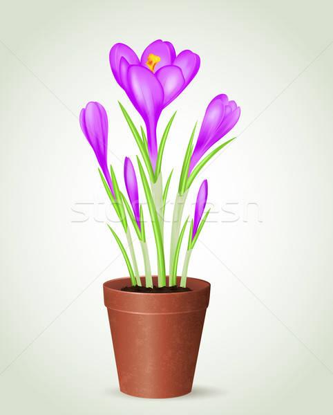 Ibolya kikerics virágcserép vektor zöld növény Stock fotó © Artspace