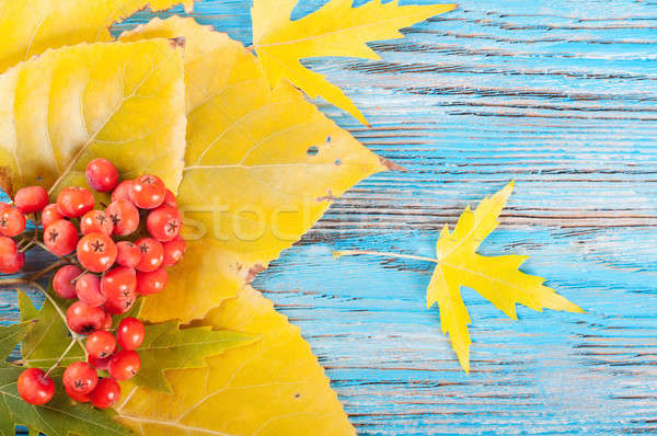 Berries and yellow leaves Stock photo © Artspace