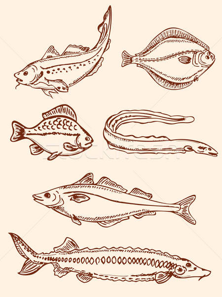 set of vintage saltwater fish Stock photo © Artspace