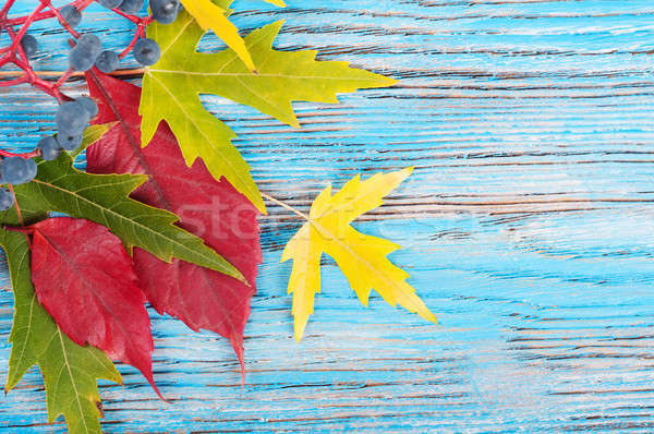 синий осень зеленый красный листьев текстуры Сток-фото © Artspace