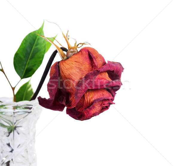 Red rose in vase Stock photo © Artspace