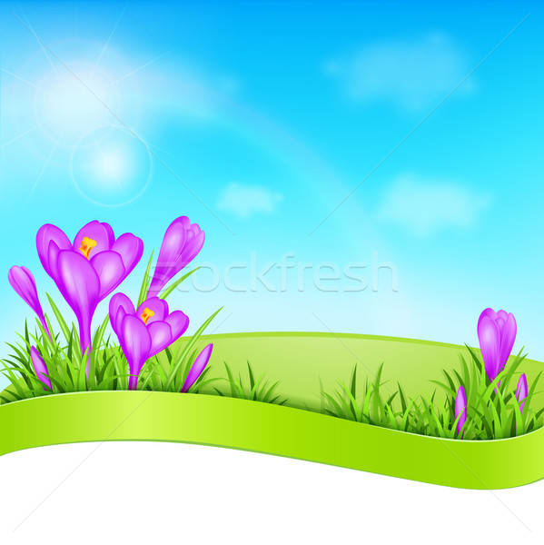 Violet crocus and green grass Stock photo © Artspace
