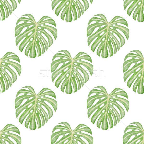 Tropikal model yaprakları yaz suluboya Stok fotoğraf © Artspace