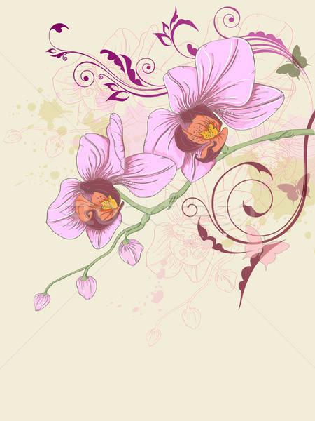 orquideas vanda fotos de vandas flores de orquideas decoracion con