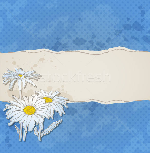 Blue background with chamomiles Stock photo © Artspace