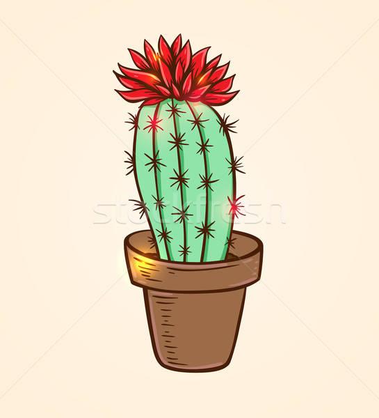 Roşu Cactus Ghiveci De Flori Floare Ilustratie