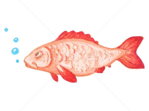 Aquarel Rood aquarium vis decoratief Stockfoto © Artspace