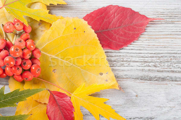 Autumn background with leaves Stock photo © Artspace