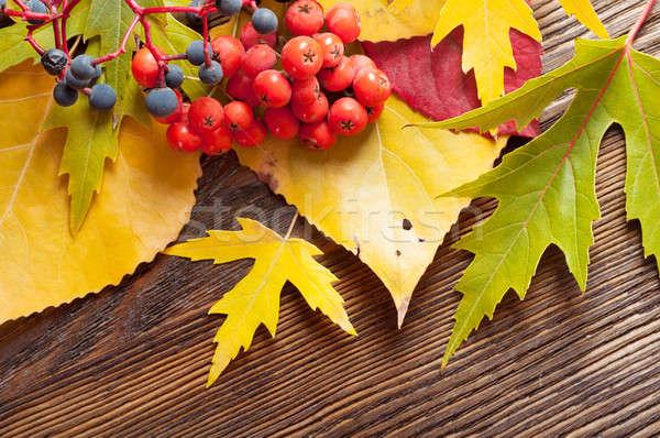 Falling leaves and rowan berries. Stock photo © Artspace