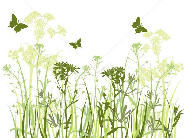 Stock fotó: Zöld · fű · pillangók · kamilla · virágok · pillangó · tavasz