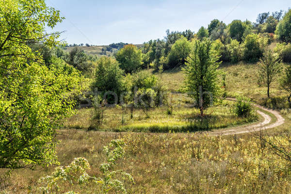 Sunny summer day in forest with clear sky and country road Stock photo © artsvitlyna