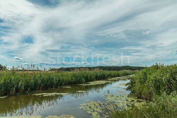 Stock photo: Beautiful summer landscape with little river. High green grass