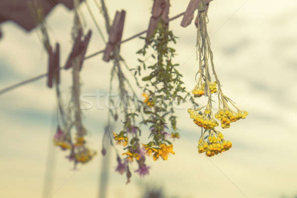 Stock photo: Herbs dried in the shade on a rope