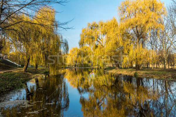 Beautiful pond with trees reflection in the water in the city pa Stock photo © artsvitlyna
