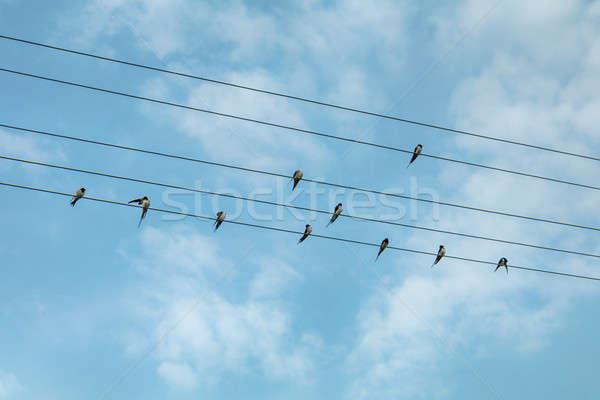 Vogels blauwe hemel hemel natuur kabel Stockfoto © artsvitlyna
