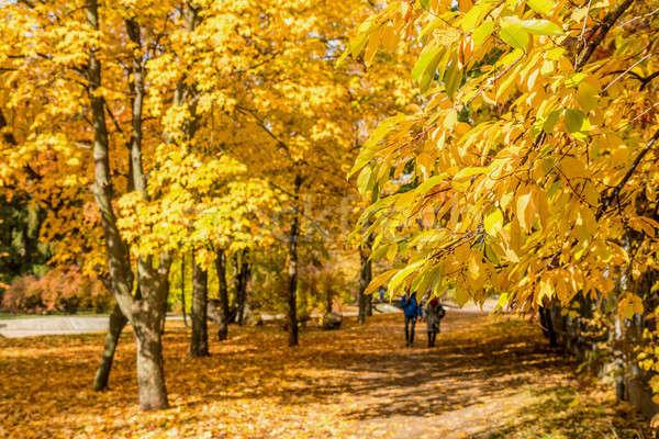 City park alley in autumn  Stock photo © artsvitlyna