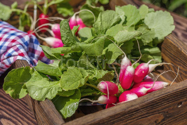 Bunch of fresh radishes in a wooden box outdoors on the table. B Stock photo © artsvitlyna