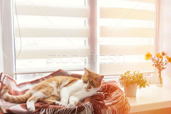 Red cat sleeping in warm wool plaid blanket Stock photo © artsvitlyna