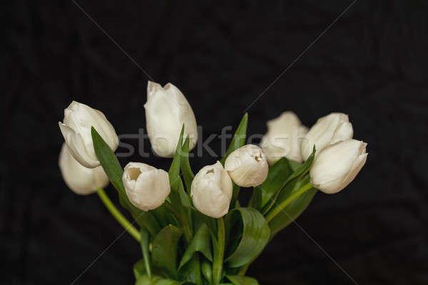 Many white tulips on black surface. Beautiful romantic backgroun Stock photo © artsvitlyna