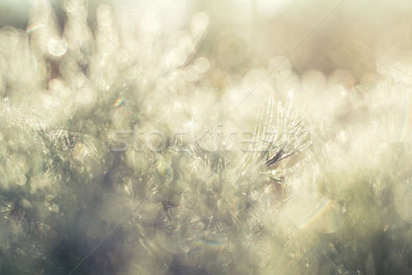 Morning dew on green grass Stock photo © artsvitlyna