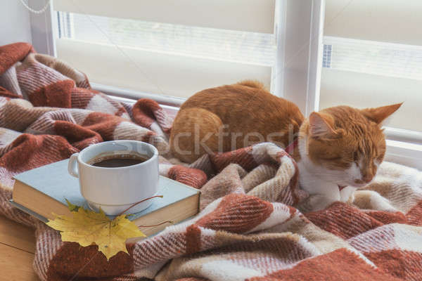 Stock photo: Cup of coffee, book with autumn yellow leaf and red-white cat su