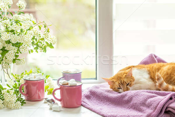 Stock photo: Kitty on the windowsill, cups of hot cocoa
