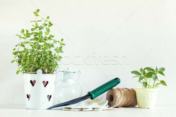 Spring gardening light concept Stock photo © artsvitlyna