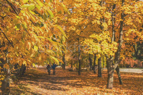 Stock photo: Couple walking along autumn alley in the city park