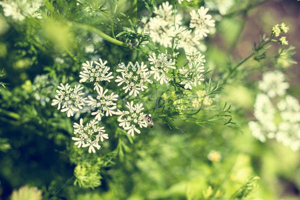 Stock photo: Beautiful summer scene with many little flowers. Toned photo. Sh