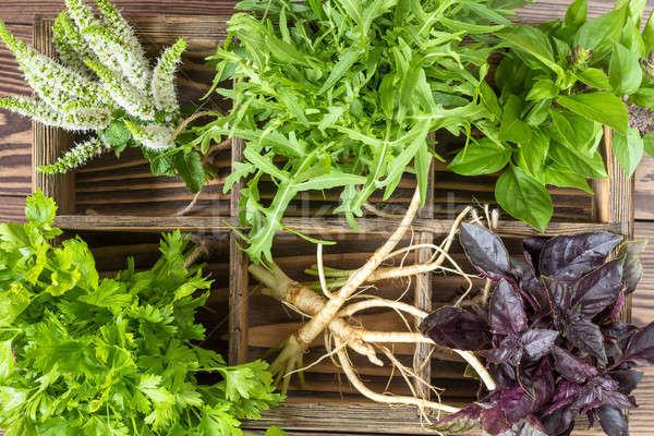 Stock photo: Fresh organic green herbs wooden floor