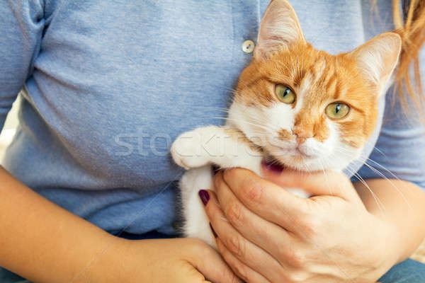 Stock photo: Woman hands hold red and white kitty cat