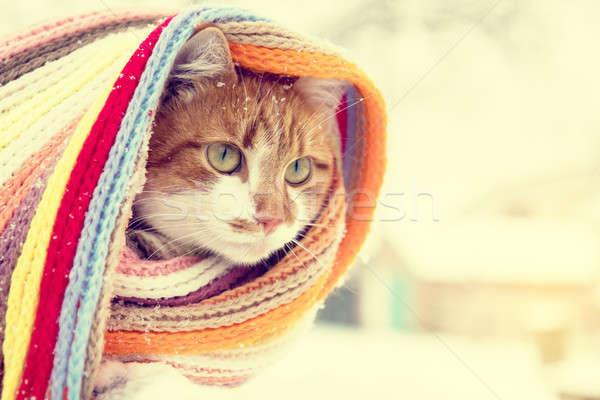 Red and white kitty cat in checkered scarf  Stock photo © artsvitlyna