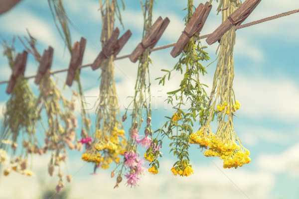 Herbs dried in the shade on a rope Stock photo © artsvitlyna